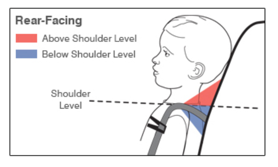 Rear-Facing Harness Adjusting to fit your child
